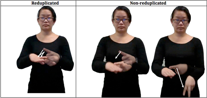Frontiers   Phonological reduplication in sign language  Rules rule     www frontiersin org