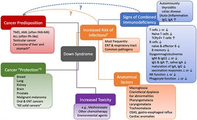 Frontiers The Pattern Of Malignancies In Down Syndrome
