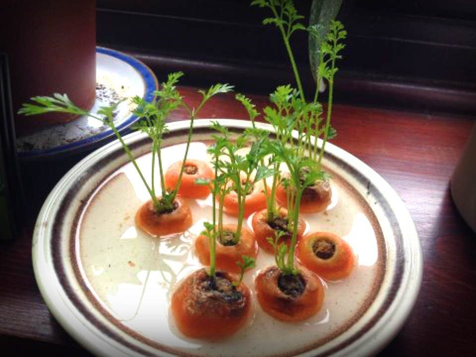 35 Foods You Can Regrow From Scraps Inside Your Own Home