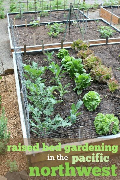 Raised Vegetable Garden Planting Guide