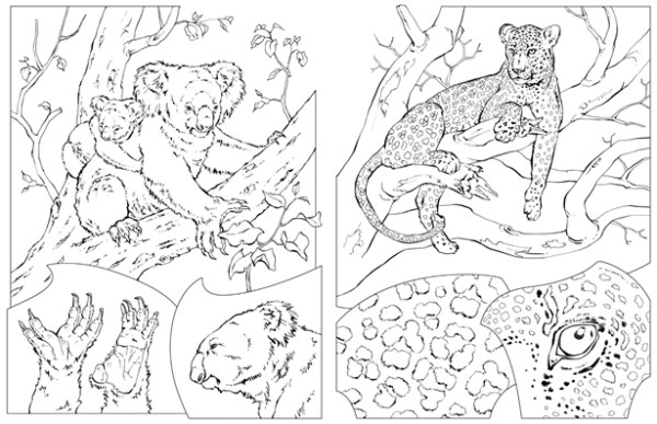 national geographic coloring pages # 3