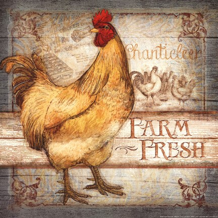 Farm Fresh Rooster Fine Art Print By Mollie B At Fulcrumgallery Com