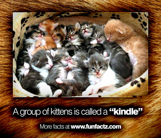 A Group Of Kittens Is Called A Quot Kindle Quot