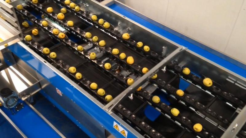 Apple Grading Line Sorting Machines