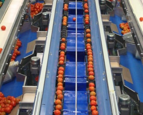 Tomato Grading Line Tomatoes Sorting Machine