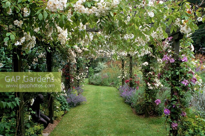 Gap Gardens View Through Pergola With Rosa Bobby James
