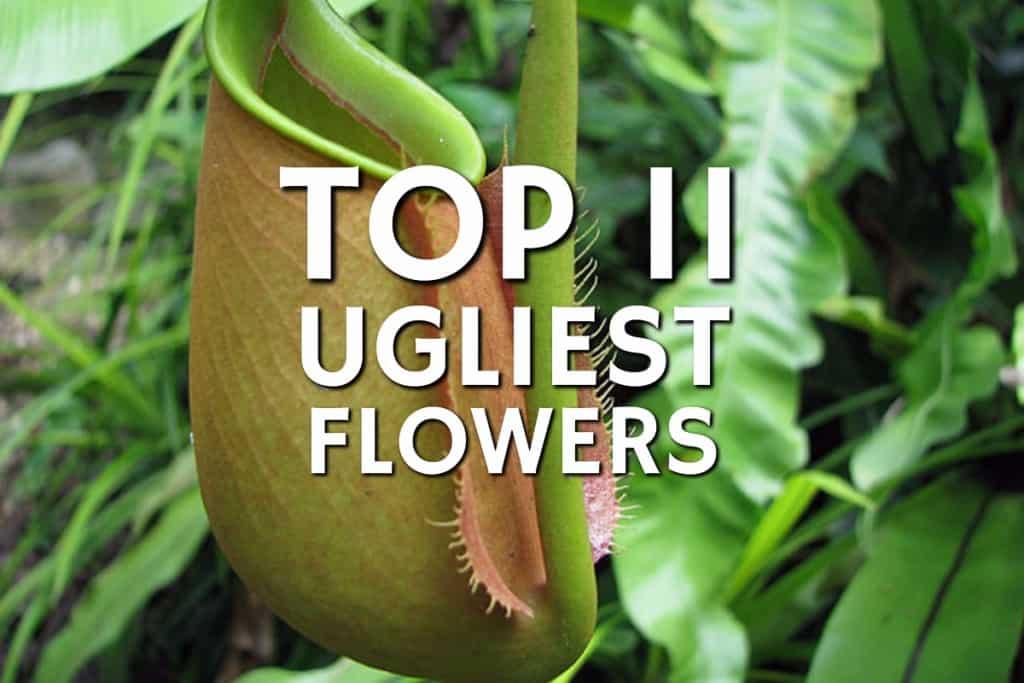 Ugliest Plant