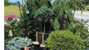Tree Displays Garden Center Magazine
