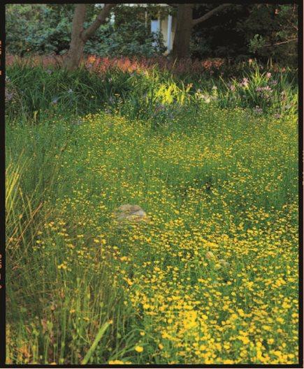 California Native Plants Garden Design