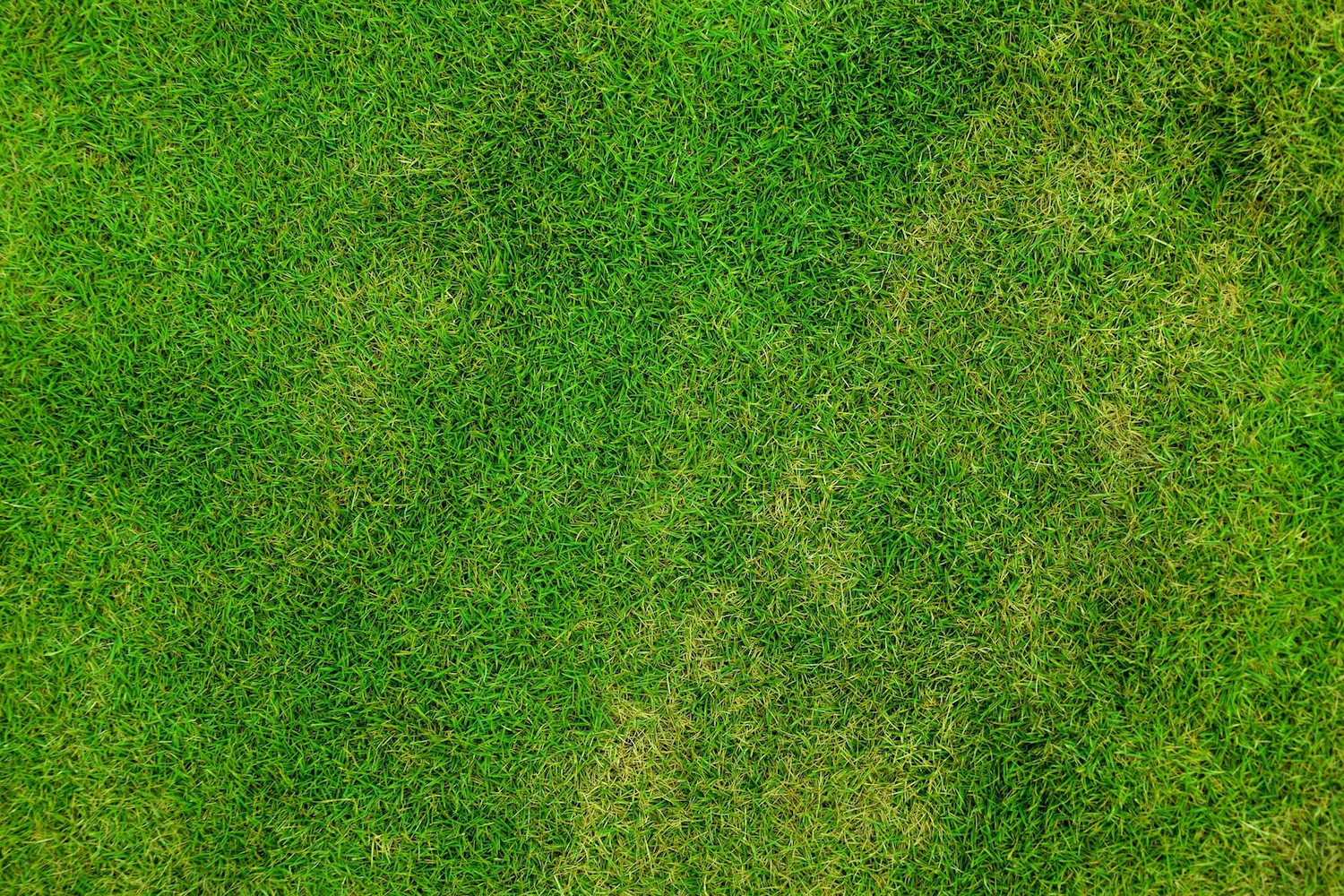 Chlorpyrifos Use Changes Amp Merit 174 Turf Withdrawal Gcma