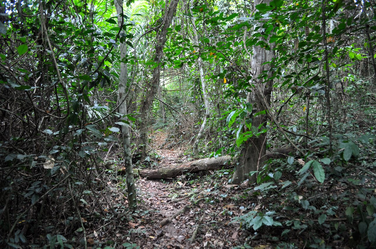 amazon rainforest location - HD1286×854