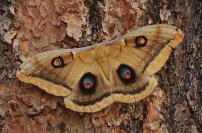 Megadiversity of Moths | GEOLOBO