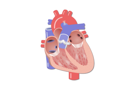 Interior heart images png 4k pictures 4k pictures full hq heart stethoscope transparent png pictures free icons and png transparent png hd heart stethoscope background image interior heart electronic wallpaper ccuart Images