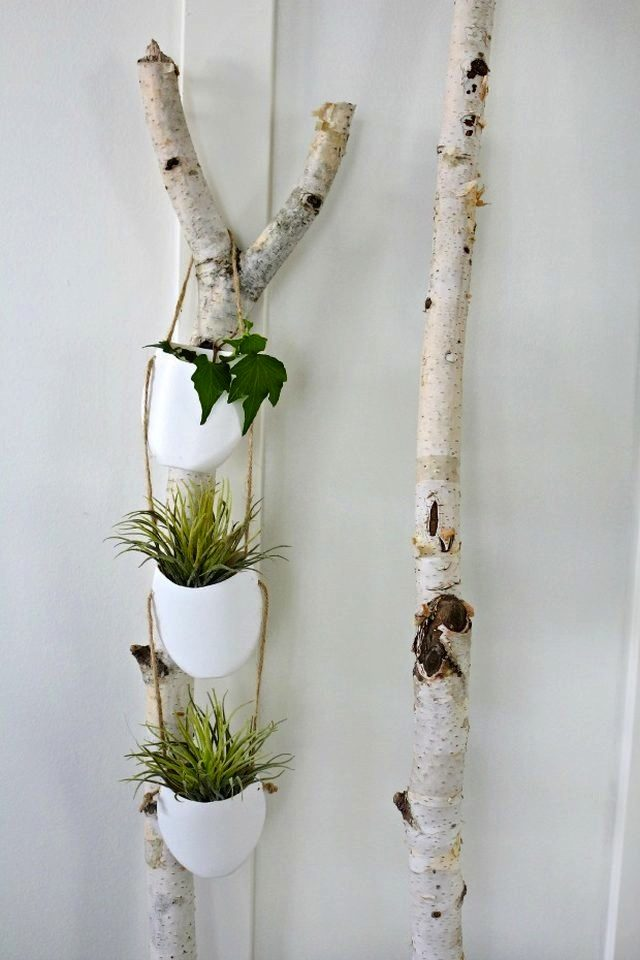 Hanging Buy Where Holders Plant