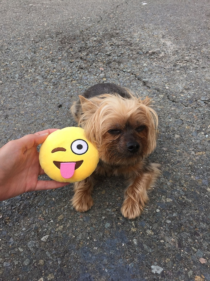 Winky Tongue Emoji Dog Toy