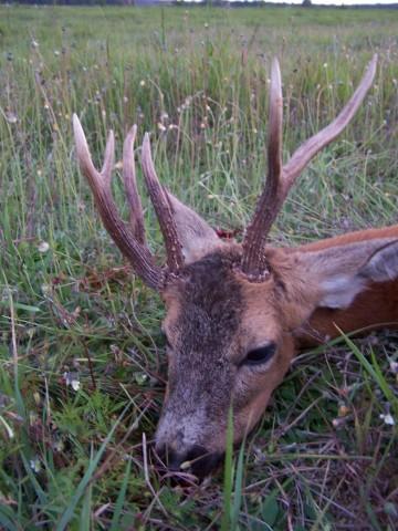 Global Hunting Agency
