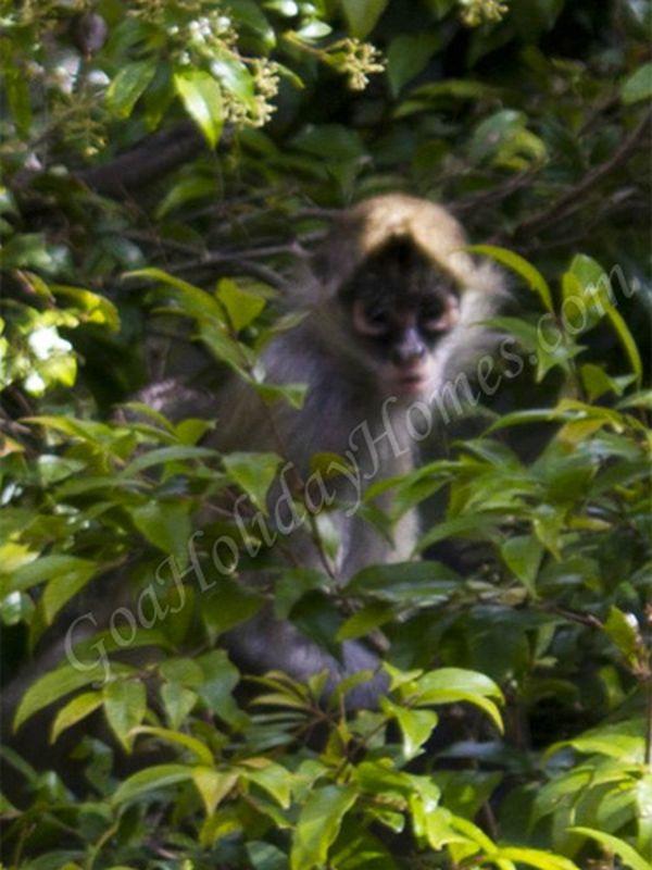 Netravali Wildlife Sanctuary In Goa Netravali Sanctuary