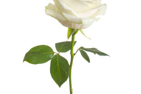 Beautiful flowers 2019 white flower symbolism beautiful flowers white flower symbolism various pictures of the most beautiful flowers can be found here find and download the prettiest flowers ornamental plants mightylinksfo