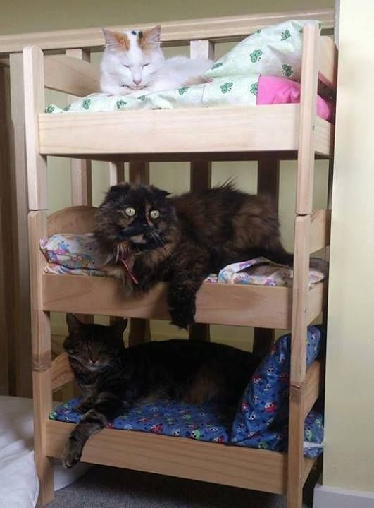 10 Purrfect Diy Pallet Cat Beds For Your Pampered Feline