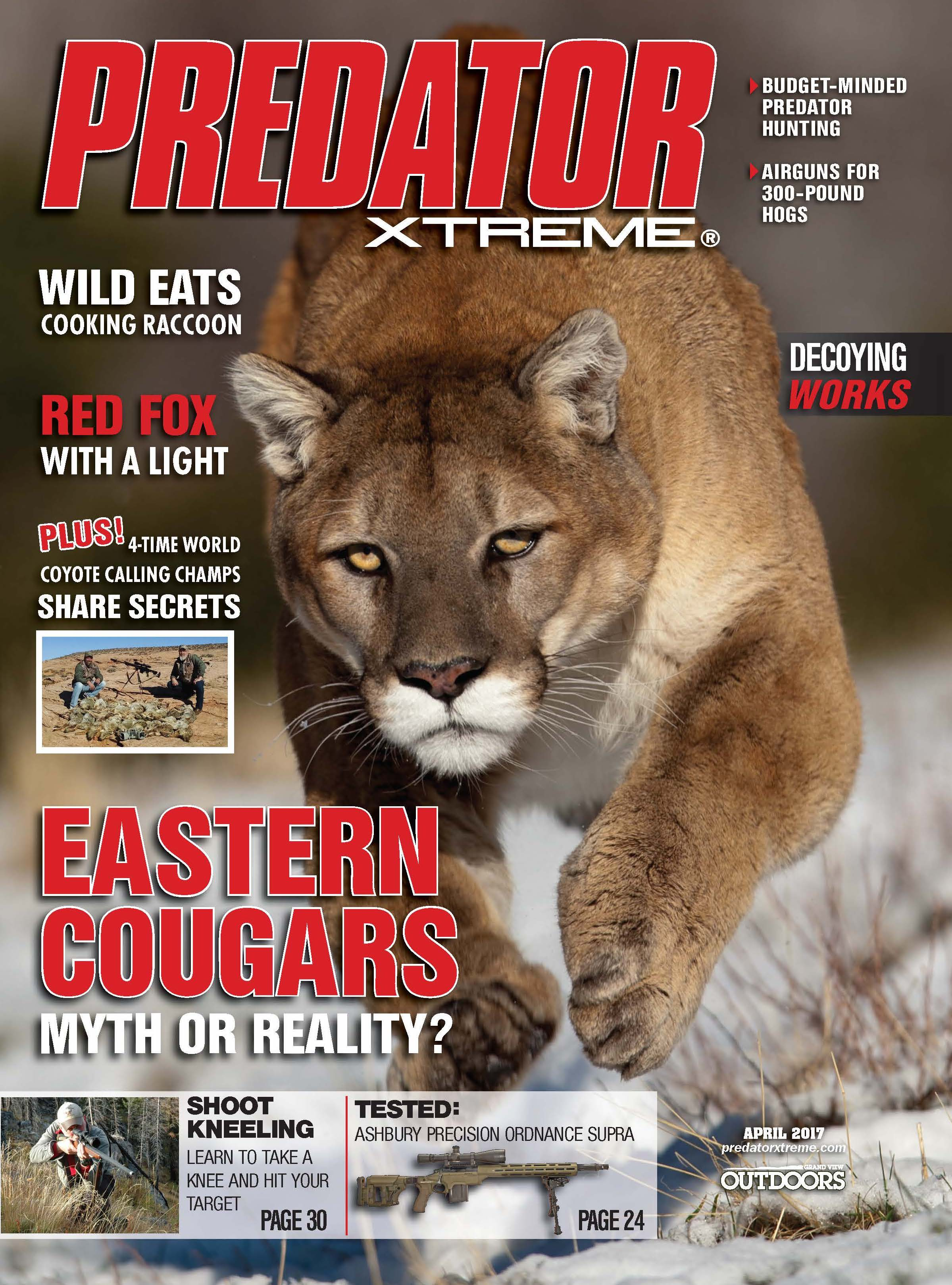 The Myth of the Eastern Cougar | Grand View Outdoors