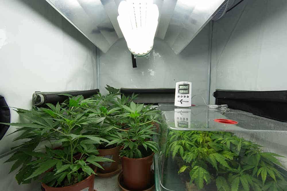 Best Light Bulb Indoor Plants