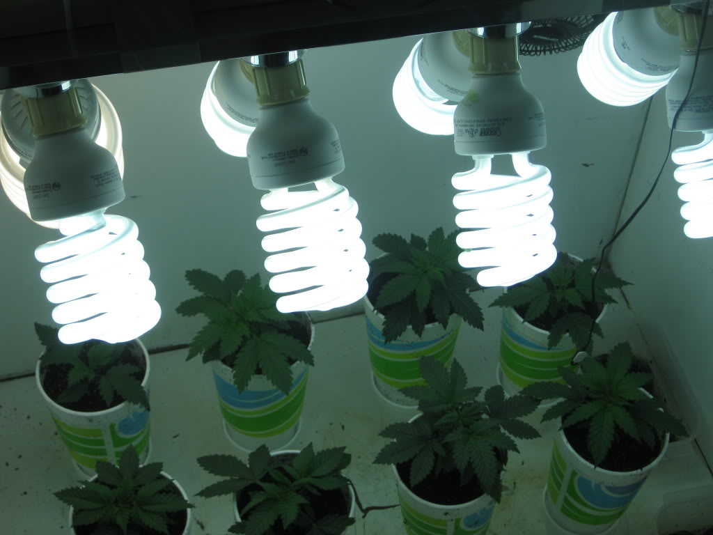 Best Light Bulb Natural Light