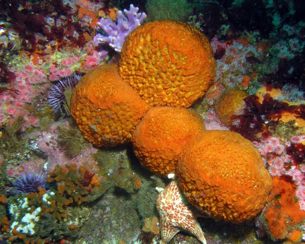 7 Reasons Why Sea Sponges Are The Coolest Greenpeace Uk