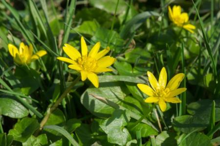 Yellow weed flower name flower images 2018 flower images identifying common garden weeds weedicide co uk creeping cinquefoil small yellow flower weed choice image flower decoration ideas weed with yellow mightylinksfo