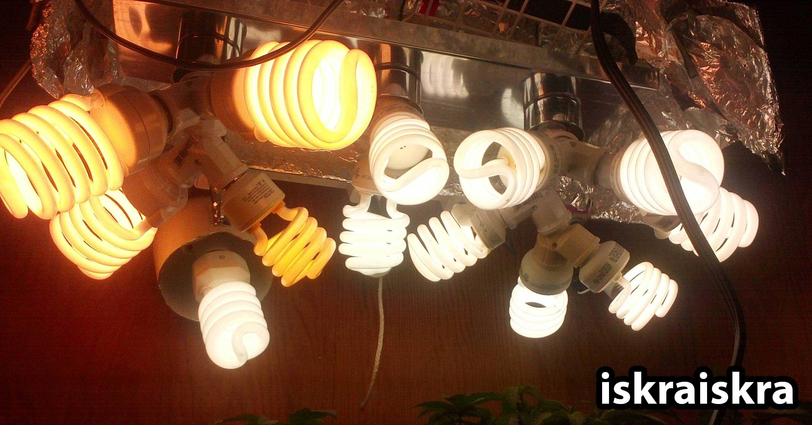 Cfl Light Bulbs Growing Plants