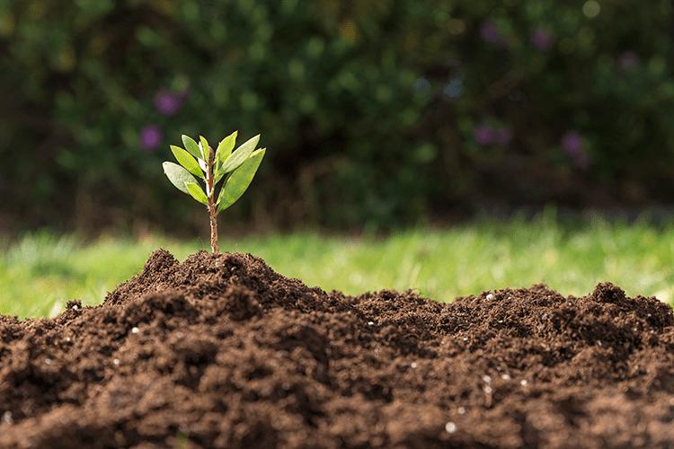 Planta na grama
