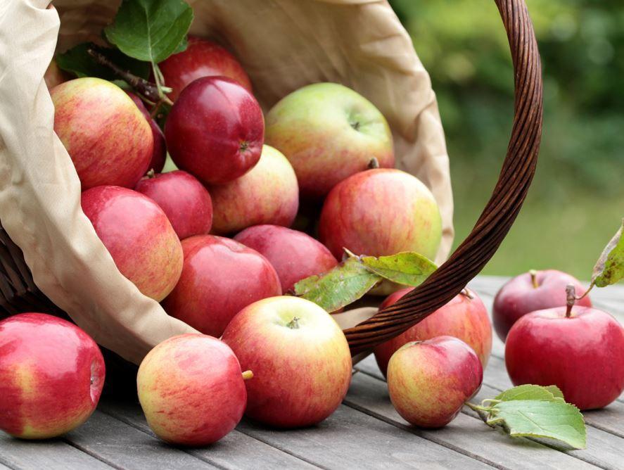 Crisp Apples Hale Groves