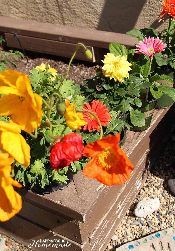 Monrovia Flowers