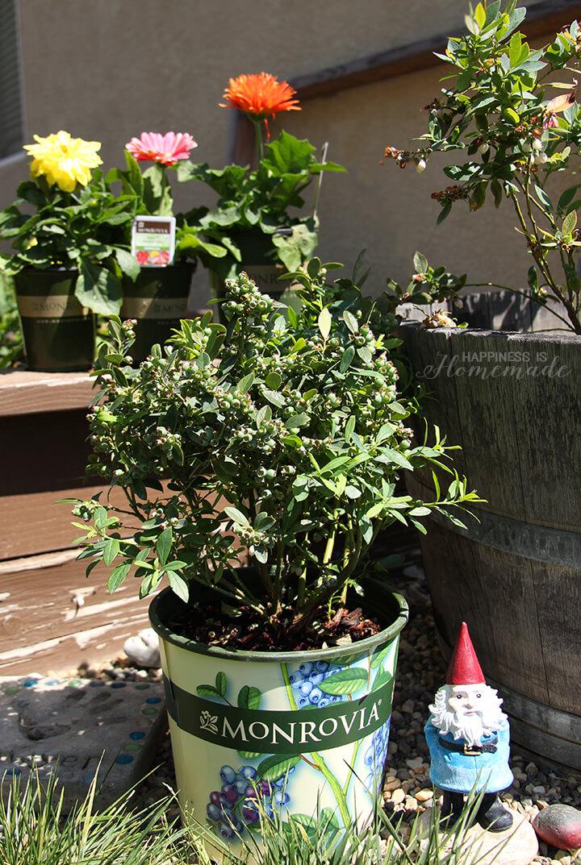 Monrovia Plants and Flowers