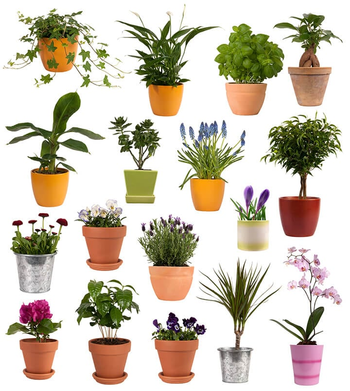 Flowers and plants in pots