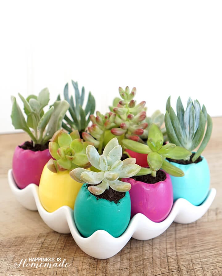 Colorful Egg Succulent Planters for Spring and Easter