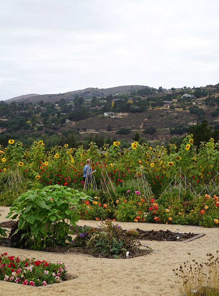 organic-garden-at-carmel-valley-ranch-2