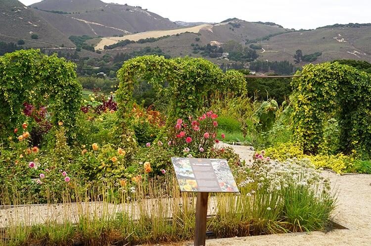 organic-garden-at-carmel-valley-ranch-3