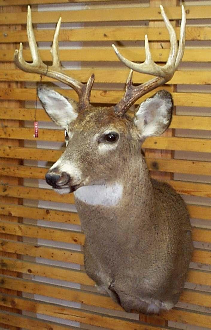 Fake Moose Head Wall Mount
