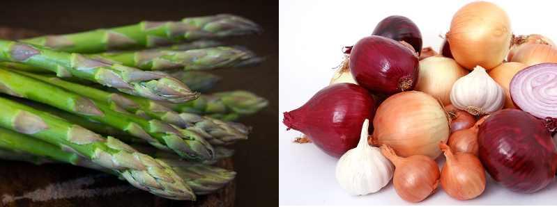 Types Stem Vegetables