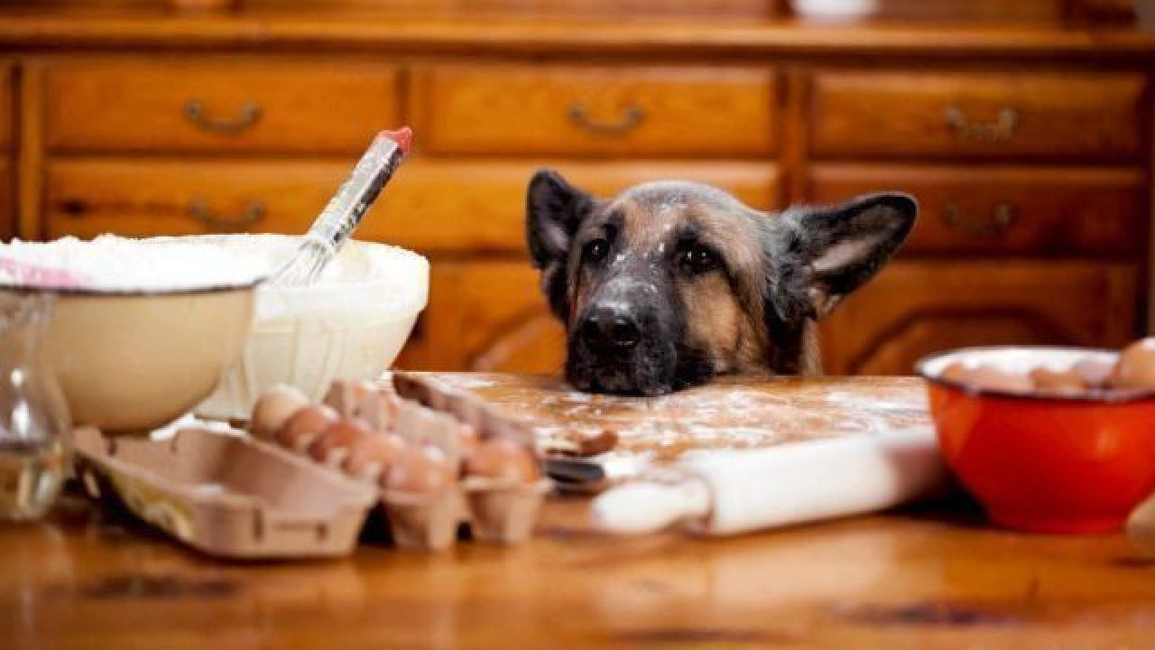 Cook For Your Dog Homemade Dog Food Recipes Healthy Paws