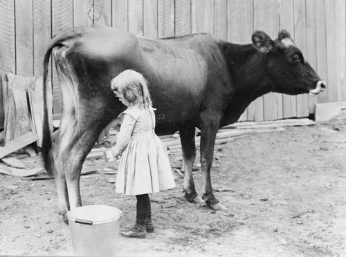 Breed Milk Best Family Cow