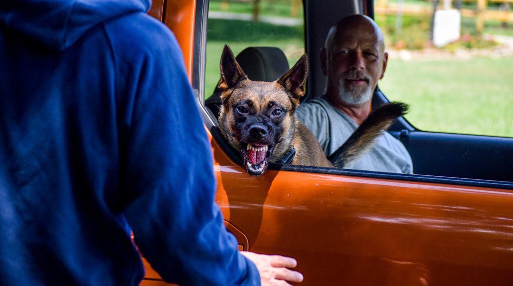 Executive Dog Protection