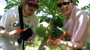 experience pick your fruit in langkawi