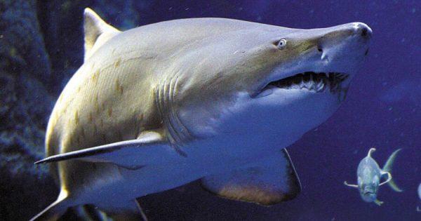 Shark Sightings South Carolina