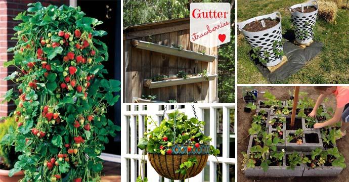 Build Gutter Garden