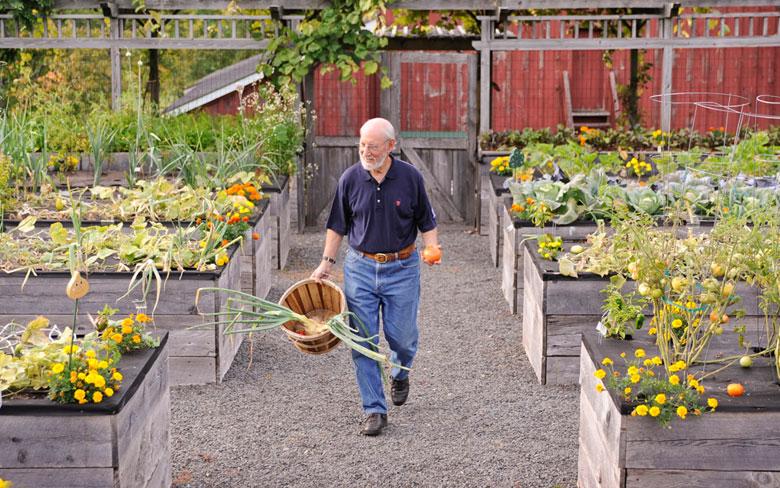 How Build Raised Strawberry Garden