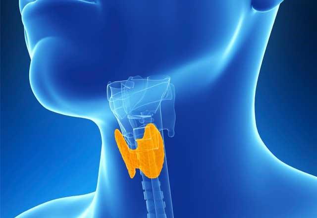 Thyroid Gland Neck Pain