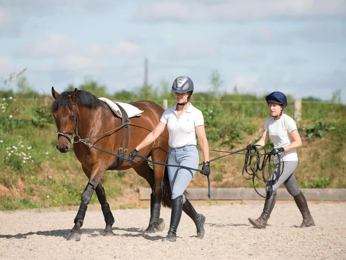groundwork horses - HD1200×900