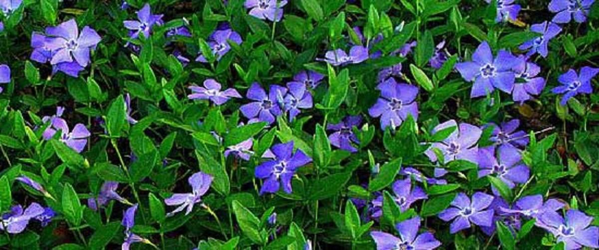 Best Leaf Blower Large Garden