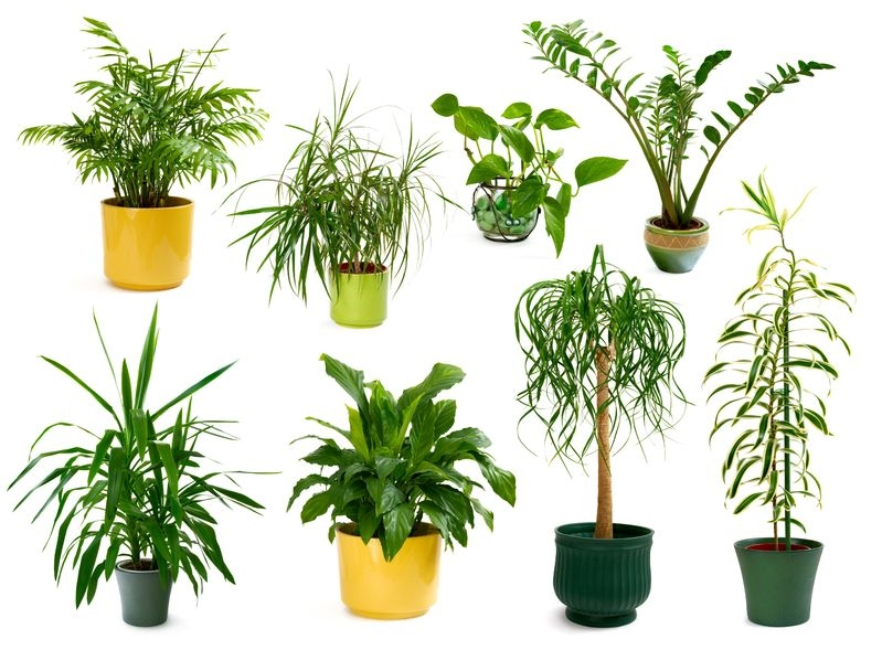 Plants Different Indoor